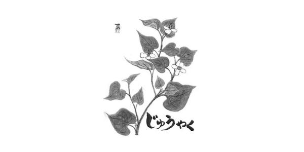 ジュウヤク(重薬・十薬)